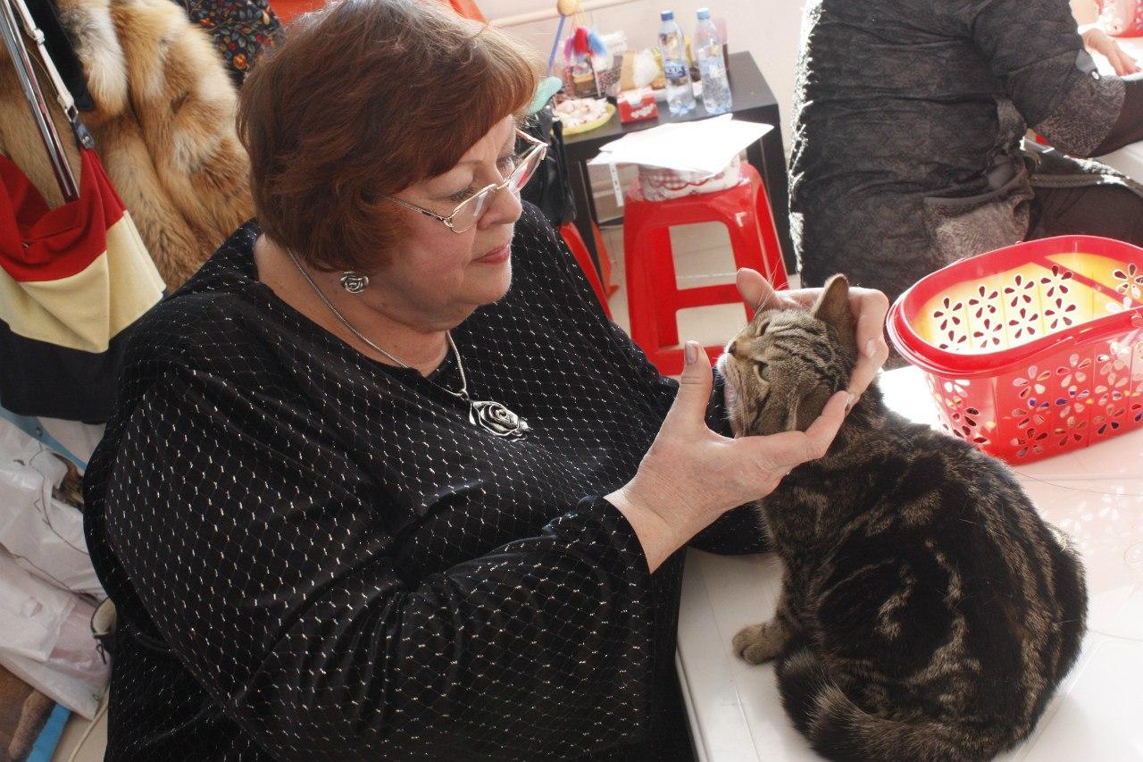 """На выставку """"Снежный барс"""" в Тамбов привезли кошек со всех регионов ЦФО"""
