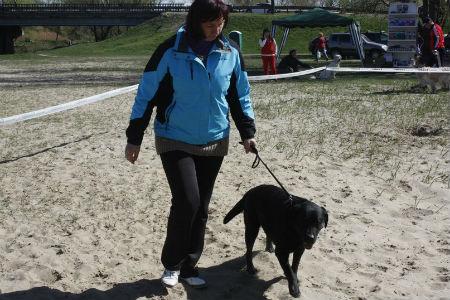 выставка подружейных собак