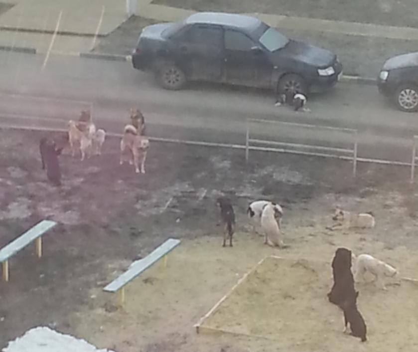 Жители Тамбова обеспокоены появлением в городе множества бродячих собак