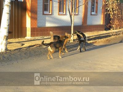 Жители улицы августа Бебеля в областном центре обеспокоены количеством собак, обитающих в окрестностях