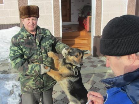 Тамбовские ветеринары ищут собаку, покусавшую 11 человек