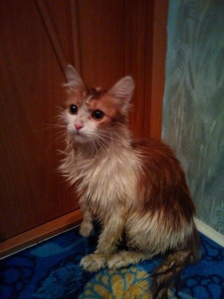 В скорую помощь для животных от жителей Тамбовской области поступает 15-20 звонков в день