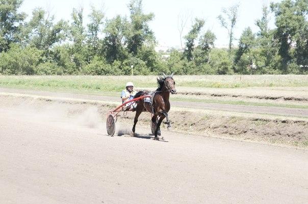 На тамбовском ипподроме прошли традиционные Соревнования по конкуру и бега