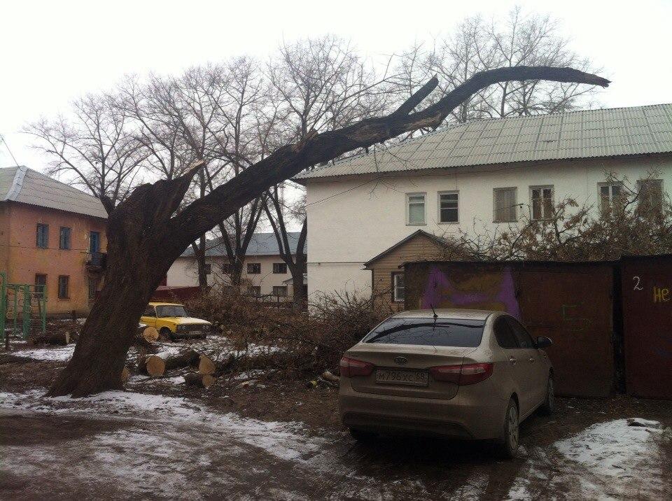 В Тамбове дерево, упавшее на четыре автомобиля, уберут в течение месяца