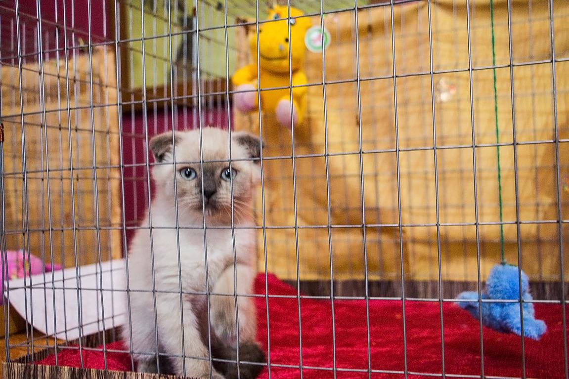 Кот и пёс в тамбове