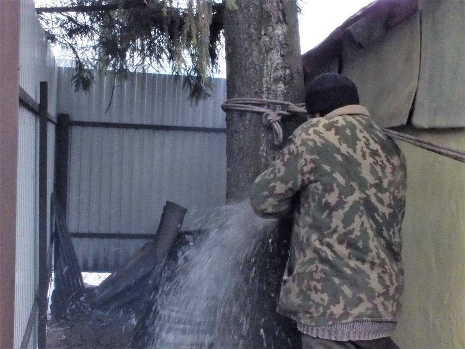Гражданин Моршанска подарил городу 15-метровую ель