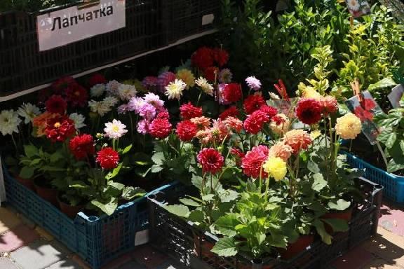 Фестиваль цветов в парке дружбы