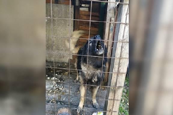 В Моршанске мужчина натравил собаку на полицейского
