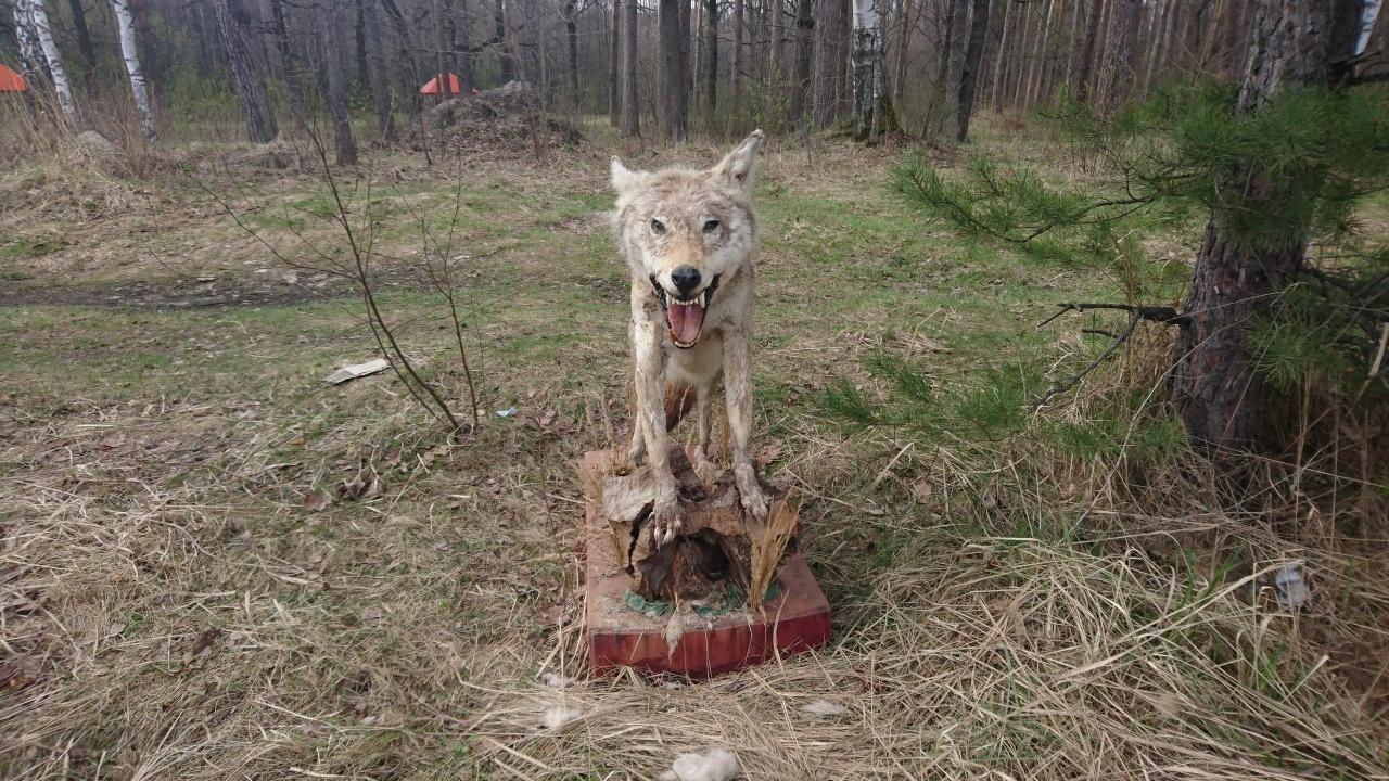 открытка приколы с тамбовским волком фото бережно