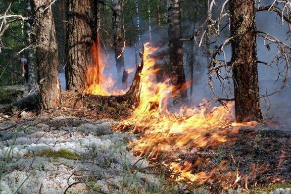 В Тамбовской области установлен третий класс пожарной опасности
